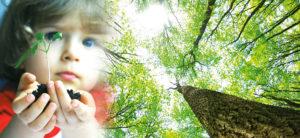 epanouissement sante belle journee forme bonheur nuage beau ciel herbe douce pure enfance nature arbre croissance racines promotion de l'éducation AFEPS planter un arbre une graine terre mère grandir